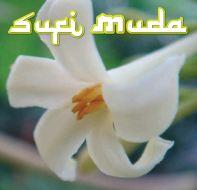 SUFI MUDA-05